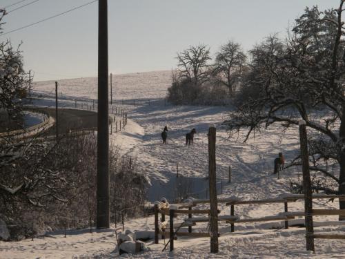 Winter 078